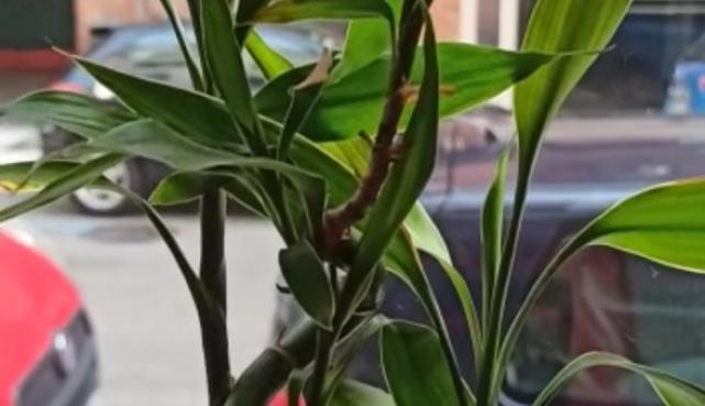 Abanico, Qiang (lanza), Hu Die Dao (espadas mariposa) y sables Dao dobles